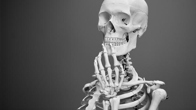 7 Fungsi Rangka Manusia Beserta Penjelasannya Yang Perlu Diketahui Health Liputan6 Com
