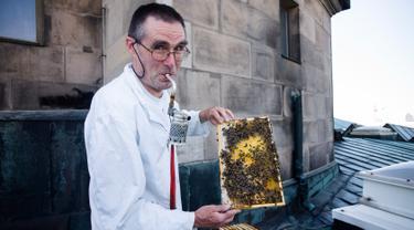 Peternak lebah, Uwe Marth menunjukkan sarang lebah madu yang diproduksi di atap Katedral Berlin di Berlin, 14 Mei 2018. Seseorang tidak akan mengira kalau ibu kota Jerman itu adalah lokasi ideal untuk beternak lebah dan produksi madu (AP/Markus Schreiber)