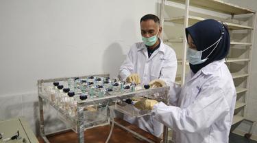 Balitbang Kementan Ekspose Uji Lanjutan Eucalyptus pada Virus SARS-CoV2