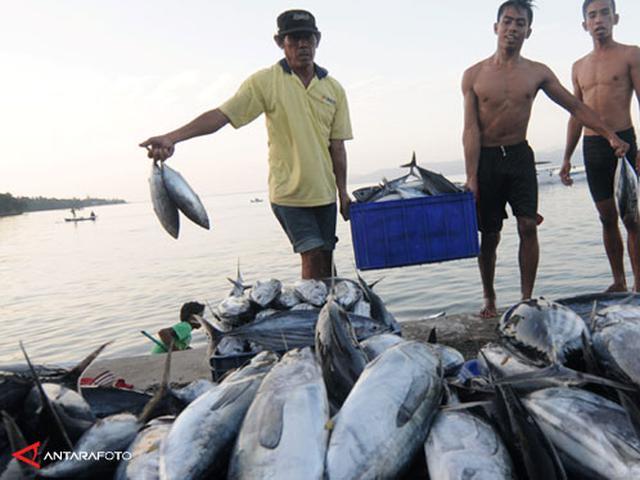 Ikan Tuna Di Indonesia Bakal Terancam Punah Bisnis Liputan6 Com