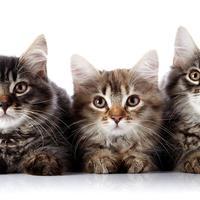 Hari Kucing Internasional | foto : istimewa