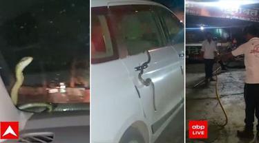 Pengendara Ertiga Ini Menemukan Ular di Kaca Depan saat Mobil Berjalan (Cartoq)