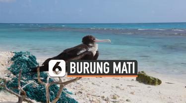 Midway Atoll, sebuah pulau khusus yang dipenuhi banyak spesies burung laut langka yang berada di Kepulauan Hawaii, Amerika Serikat. Salah satunya, elang laut terbesar di dunia. Namun sayang, keberadaan burung-burung tersebut terancam punah karena sam...