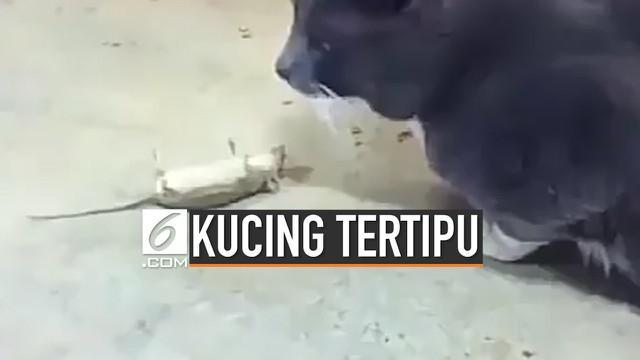 Agar tak dimangsa kucing, seekor tikus nekat pura-pura mati. Aksi tersebut ternyata berhasil, tikus pun akhirnya selamat.