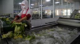Seorang pekerja mencuci kubis di Pabrik Kimchi Ryugyong yang terletak di tepi ibu kota Pyongyang, Korea Utara pada 1 Desember 2020. Kimchi adalah salah satu makanan tradisonal paling favorit bagi Korea dan terkenal sebagai salah satu makanan sehat di dunia. (KIM Won Jin/AFP)