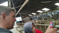 Peternak Belanda berbagi ilmu dengan peternak Indonesia untuk wujudkan swasembada susu di Indonesia. (Istimewa)