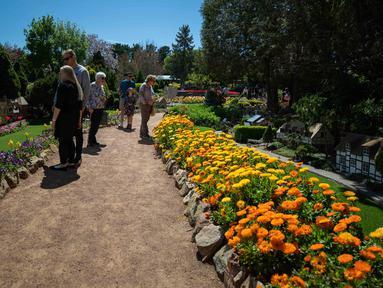 Sejumlah orang mengamati berbagai bunga dalam festival bunga tahunan Floriade di Canberra, Australia, pada 11 Oktober 2020. (Xinhua/Chu Chen)