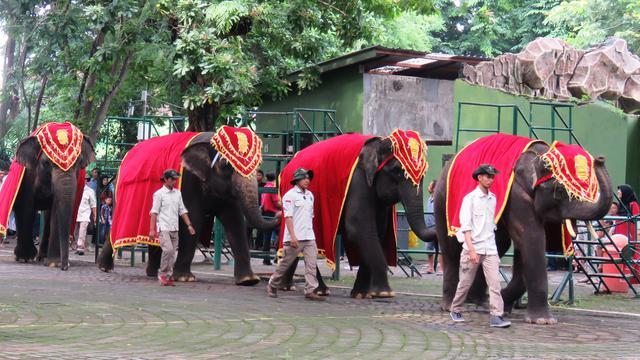 87+ Gambar Lucu Garuda Vs Gajah Kekinian